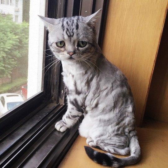 Хит Instagram: Луху - самая грустная кошка в мире