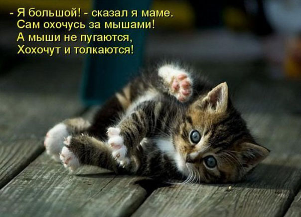 Подборка милых котоматриц