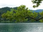 Озеро Блед. Альпийская сказка