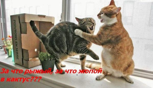 ТОП лучших котоматриц