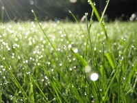 Капли на траве
