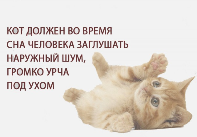 Правила жизни кота