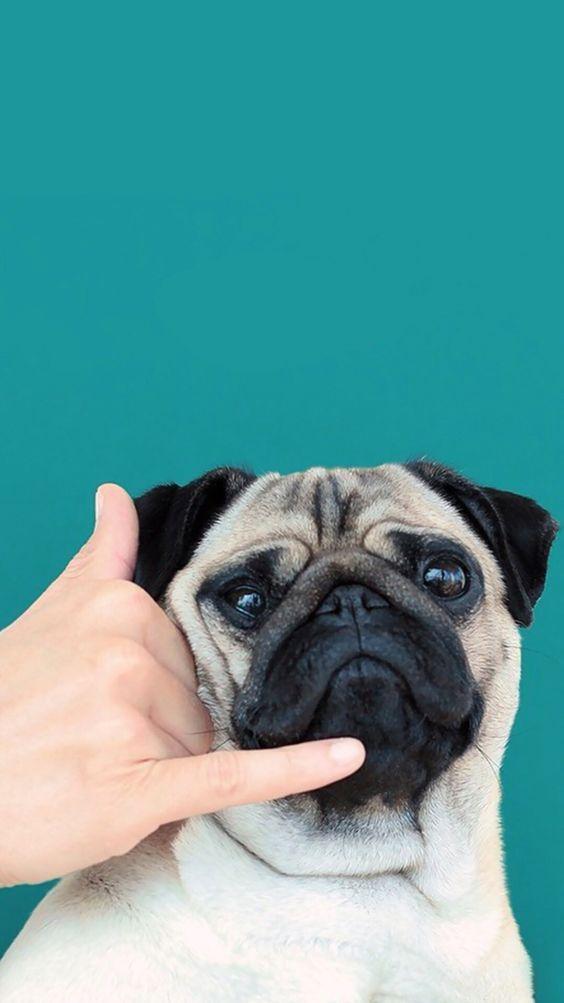 Руки и собаки: 12 фотографий с питомцами, которые ты захочешь повторить