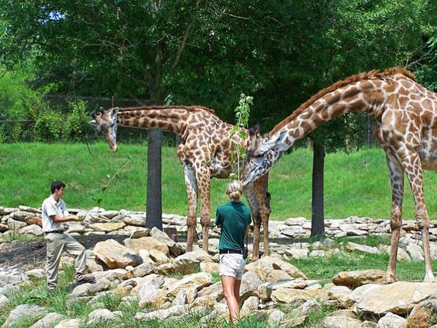 зоопарк в Гринвилле