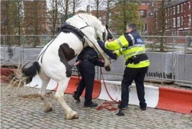 Коню явно понравился полицейский