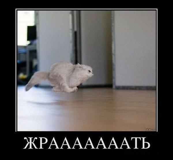 Демотиваторы про котов смешные