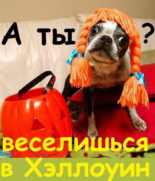 А ты? веселишься в Хэллоуин