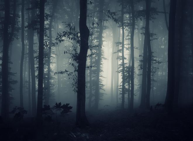 Страшный лес