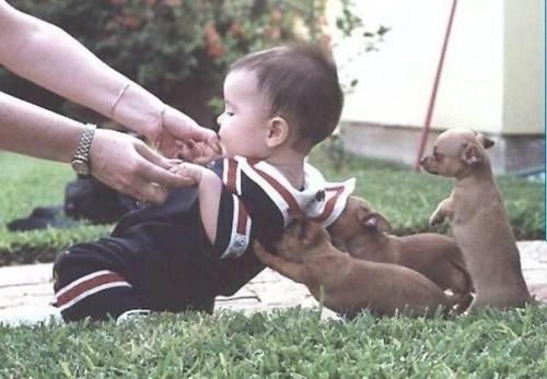 Супер приколы про собак