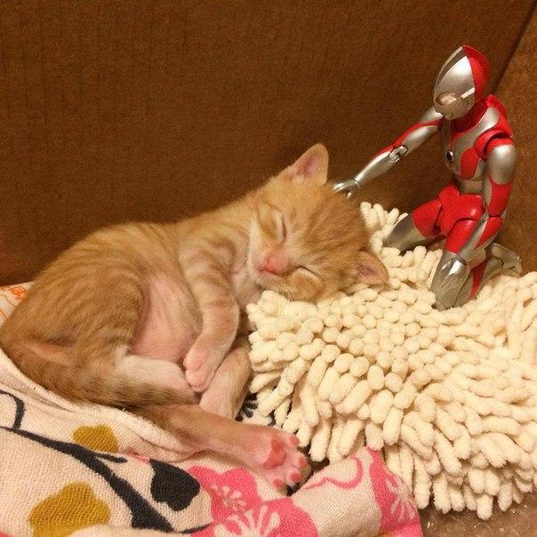 Приключения кота и робота