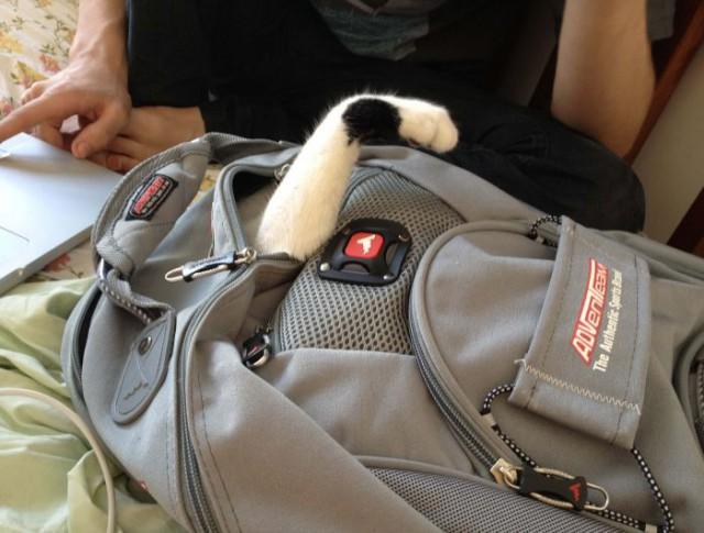Неожиданный сюрприз в рюкзаке
