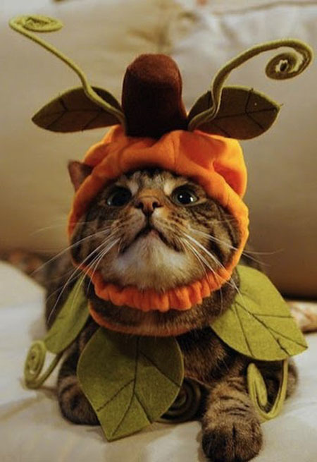 Пушистики празднуют Хэллоуин