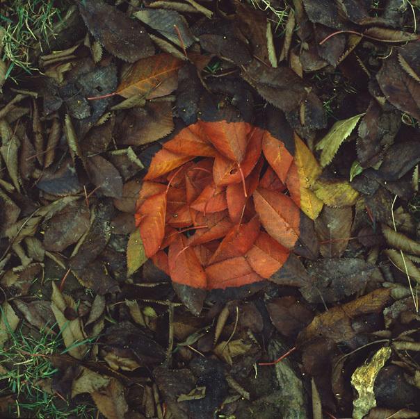 Осень перфекциониста