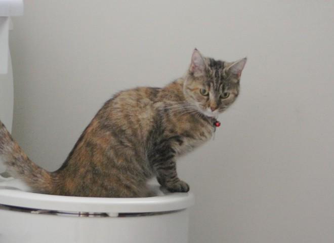 Кот гадит в новой квартире