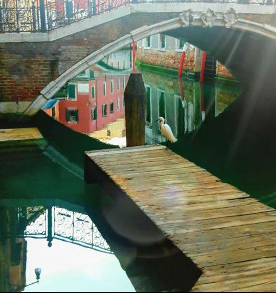 Венеція чисті канали