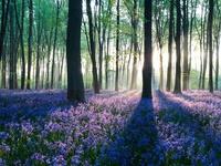 Утренние лучи в лесу