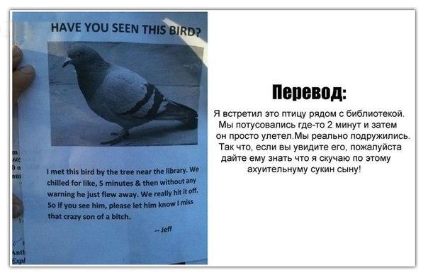 В поисках голубя