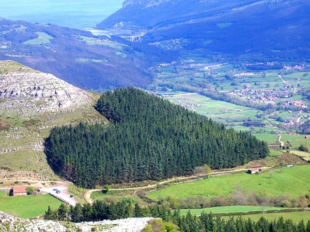Самые романтические места планеты в виде сердца: Лес в форме сердца, провинция Кантабрия, север Испании
