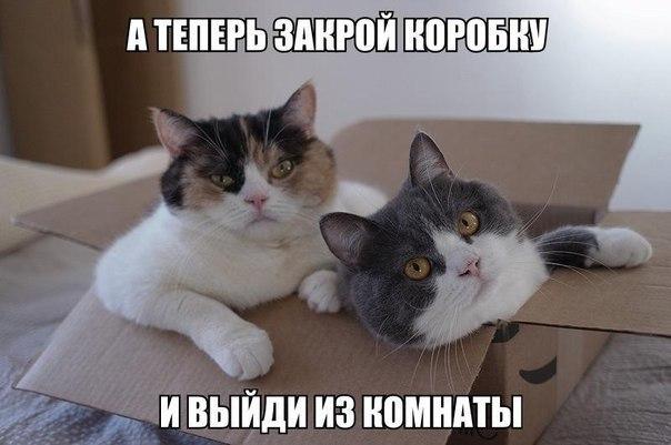Смешная картинка про котов
