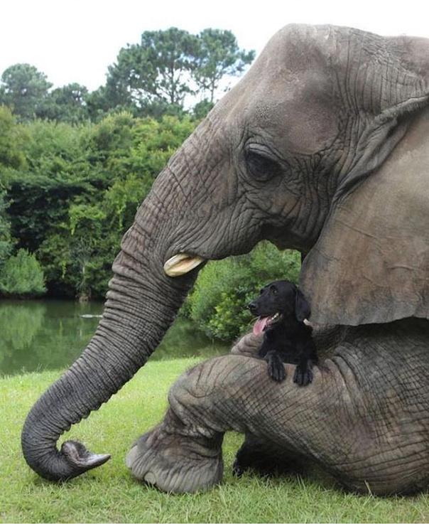 Собака и слон - лучшие друзья!