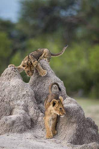 смішні фото тварин