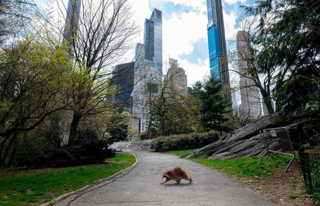 дикие животные на улицах городов