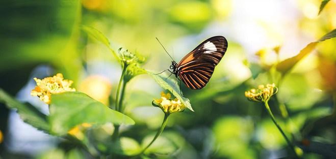 Дом бабочек на острове Аль-Нур