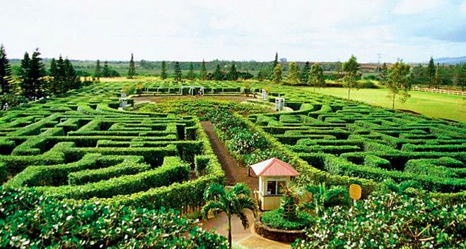 Самые запутанные лабиринты: Pineapple Garden Maze, Оаху, Гавайи