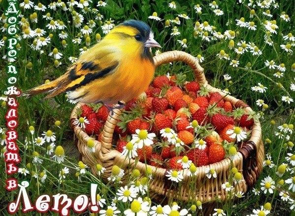 Вкусного лета