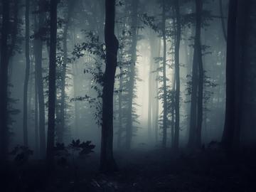 Страшний ліс
