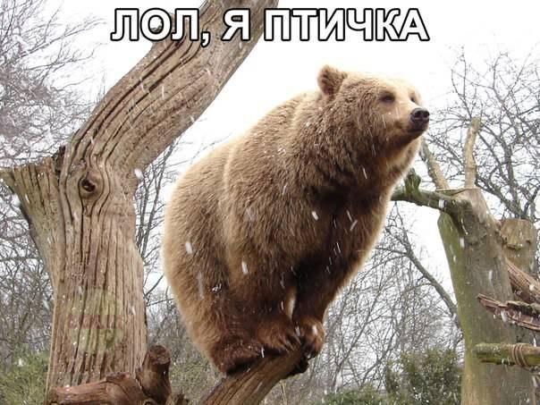 Я птичка, птичка, птичка. Я вовсе не медведь!