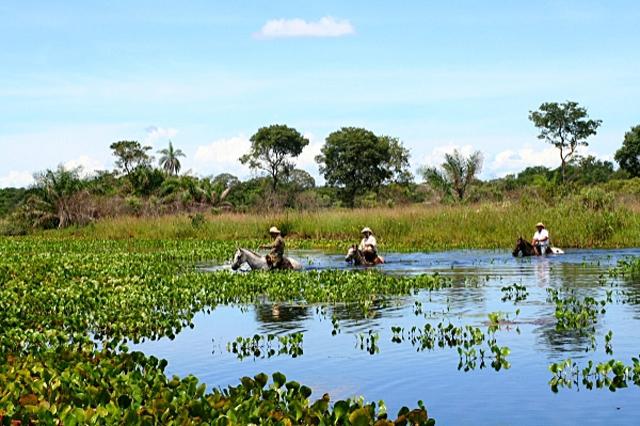 Сафарі-туризм: Бразильське сафарі