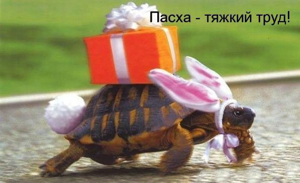 Прикольні листівки до Великодня