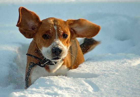 Милашки в снегу