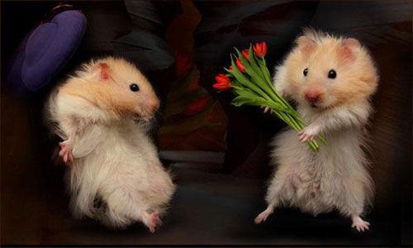 Милые дамы, с 8 марта!