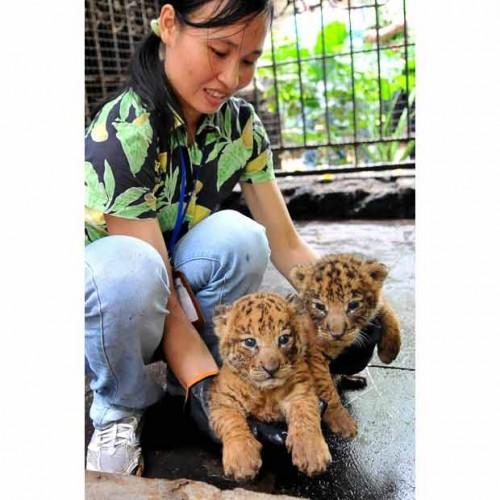 Детеныши диких животных