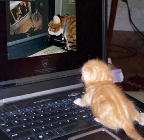 Кошачий интернет