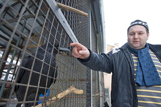 Гид по Киеву: дворик с воронами в Киеве