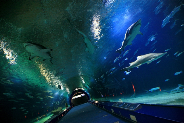Достопримечательности Валенсии: аквариум L'Oceanografic