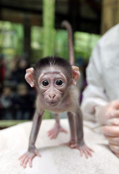 Самая няшная обезьянка в мире