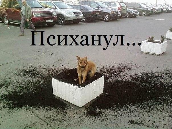 Няша психанула