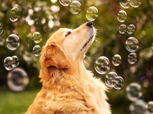Обаятельный пёс по кличке Чамп