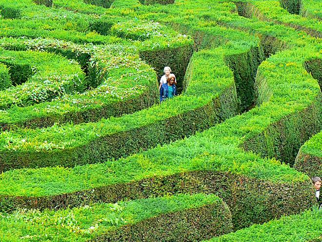 Самые запутанные лабиринты: Longleat Hedge, Уорминстер, Англия