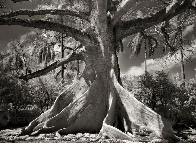 Самые древние деревья мира