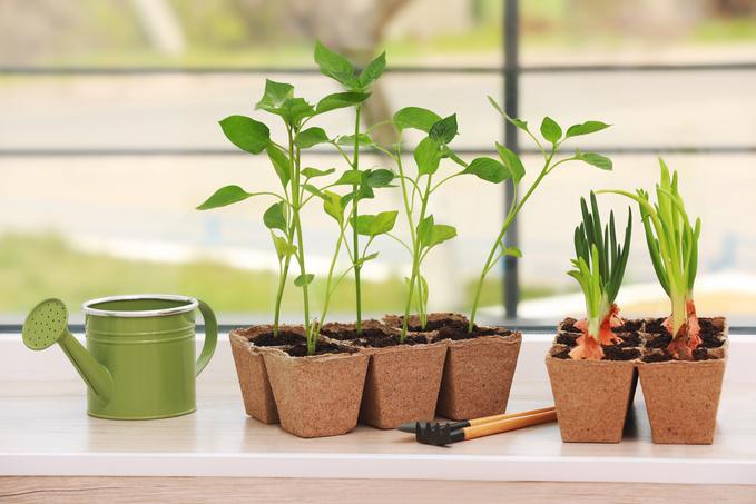 Зимний сад в интерьере: полезные идеи для дома