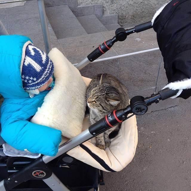 Котики - лучшие друзья детей
