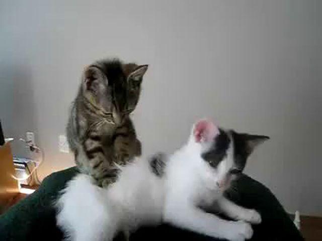 large cat litter box ideas