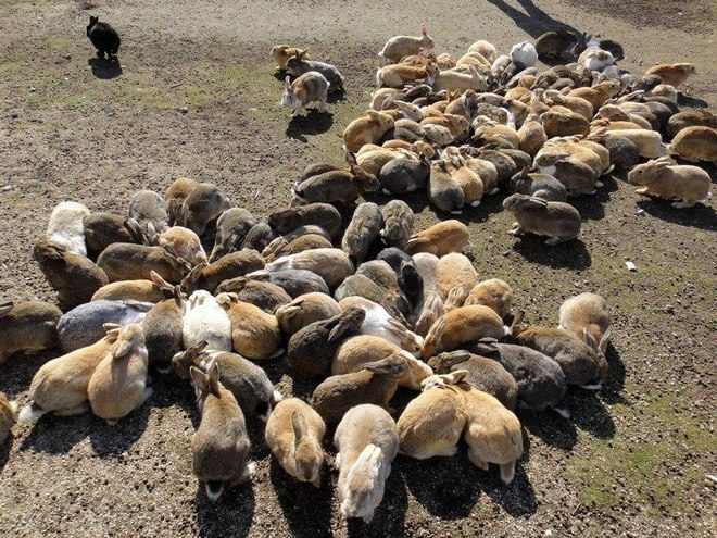 Окуносима: остров кроликов в Японии