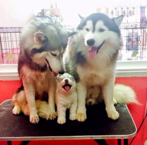 Вместе мы — счастливая семья!