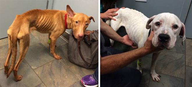 Бездомные собаки Оскар и Эмми